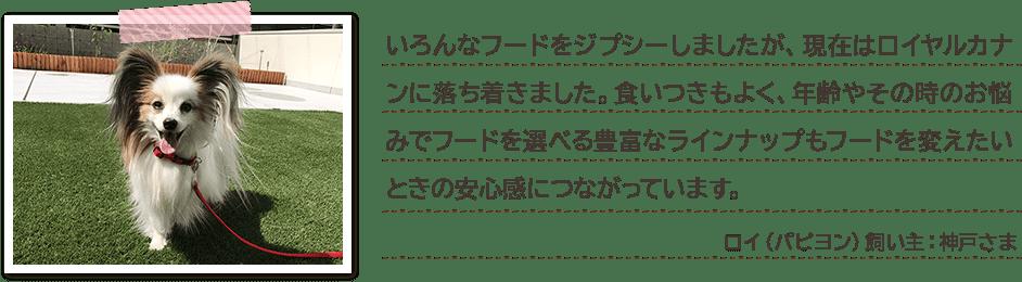 いろんなフードをジプシーしましたが、現在はロイヤルカナンに落ち着きました。食いつきもよく、年齢やその時のお悩みでフードを選べる豊富なラインナップもフードを変えたいときの安心感につながっています。 ロイ(パピヨン)飼い主:神戸さま