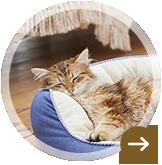 犬&猫用ベッド