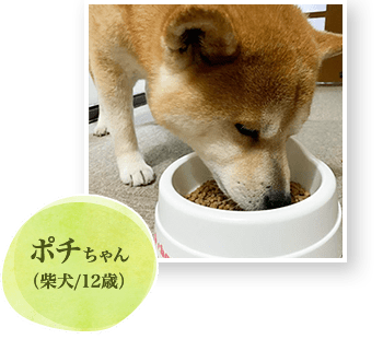 ポチちゃん(柴犬/12歳)