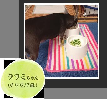 トマトちゃん(パグ/2歳)