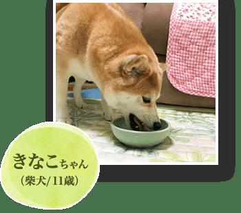 きなこちゃん(柴犬/11歳)