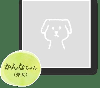 かんなちゃん(柴犬)