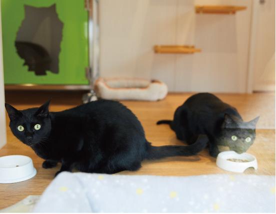 南大阪動物医療センターの猫達