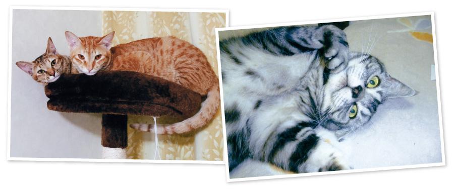 先代猫のタビーちゃん。ペットショップで一目ぼれ