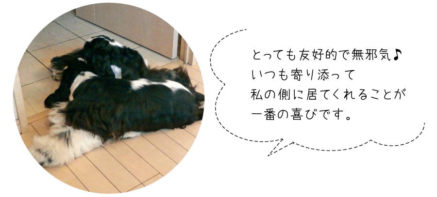 7頭目は濱田さんが昔から魅了されていたコッカーを迎えます。