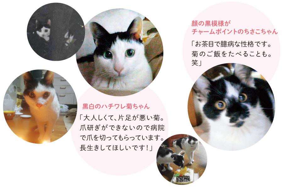猫さんたちのかわいいしぐさに癒されている後藤さん。