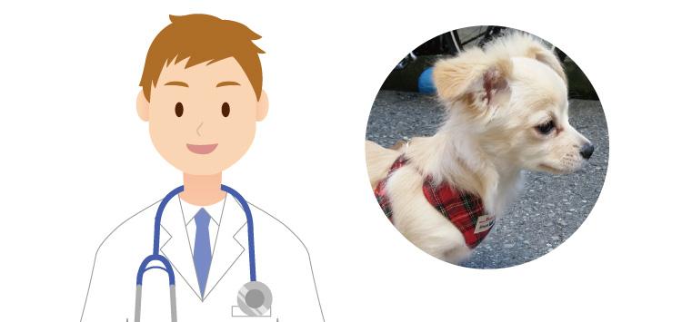 親身になってアドバイスをいただける動物病院に助けられました。