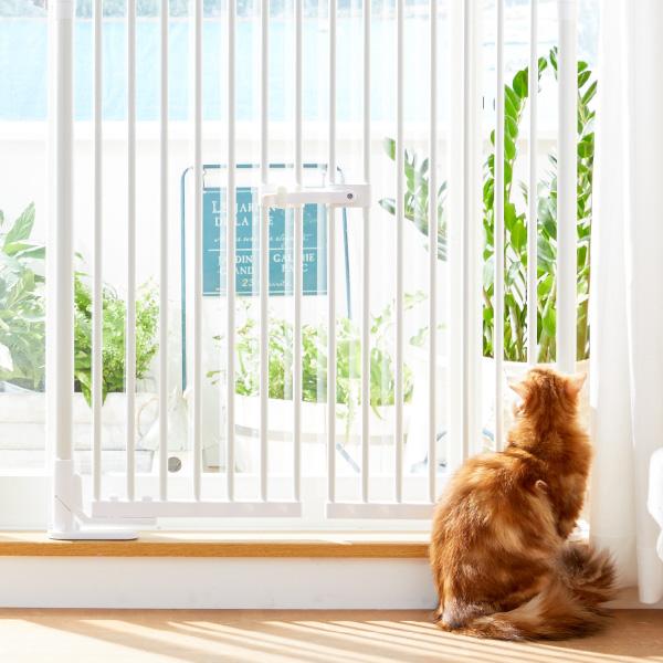 換気の際の愛猫の脱走を防ぐ