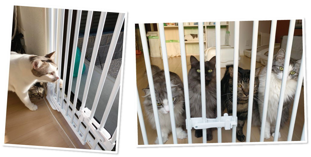 旅猫ニャン吉ファミリーものぼれないし脱走できず、商品名通りです。