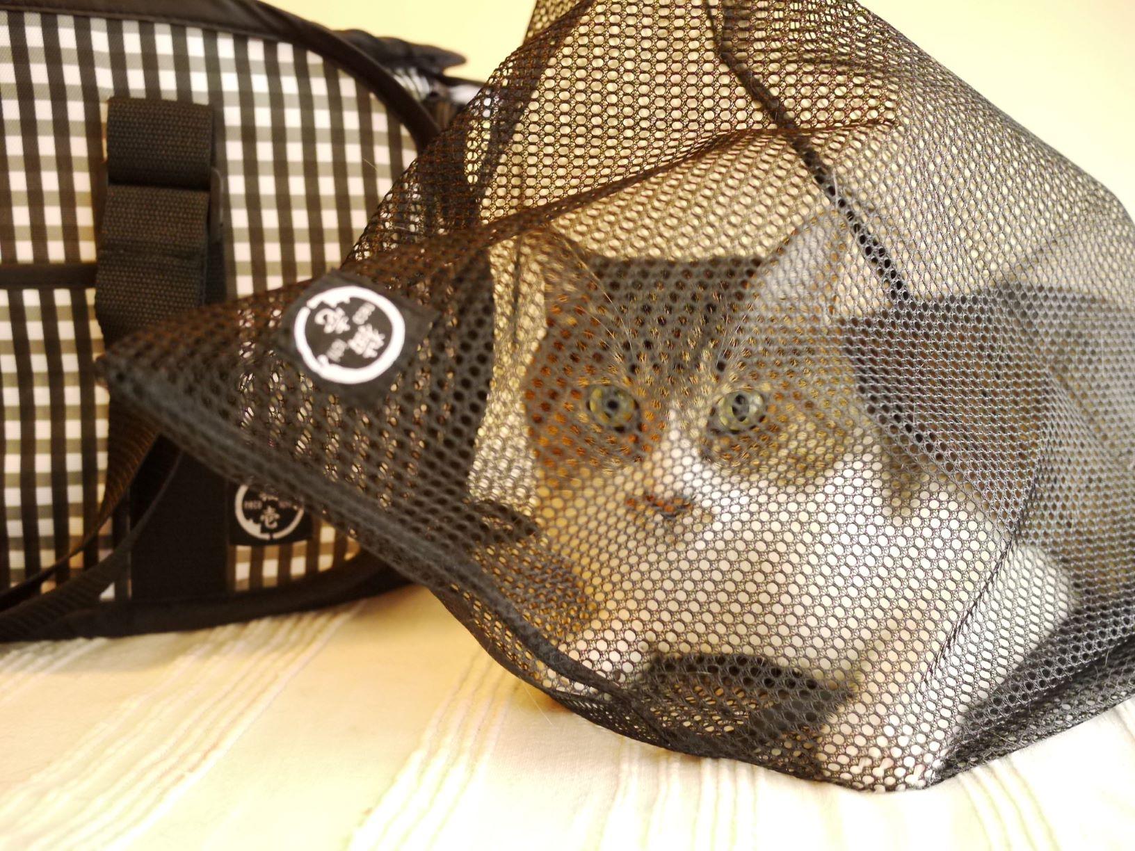 おちつくネット付きで通院、診察時も安全
