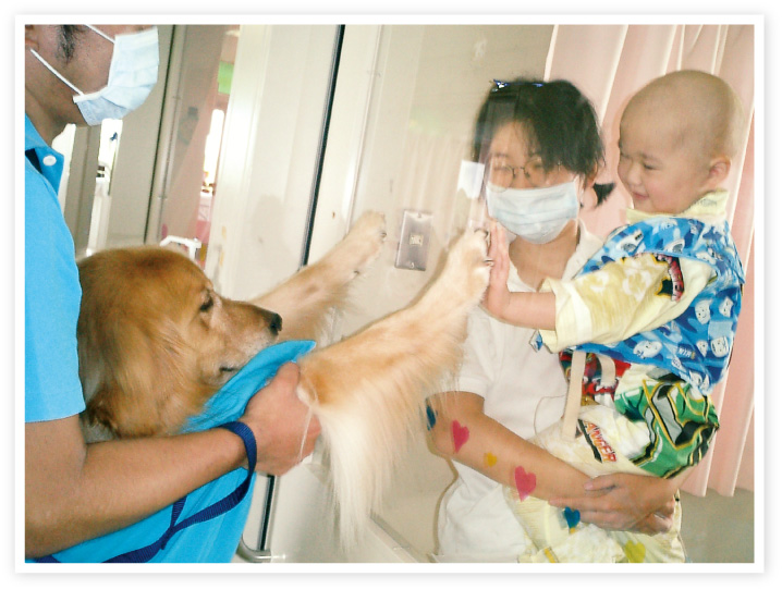 保護犬・保護猫をペットとして迎え入れる