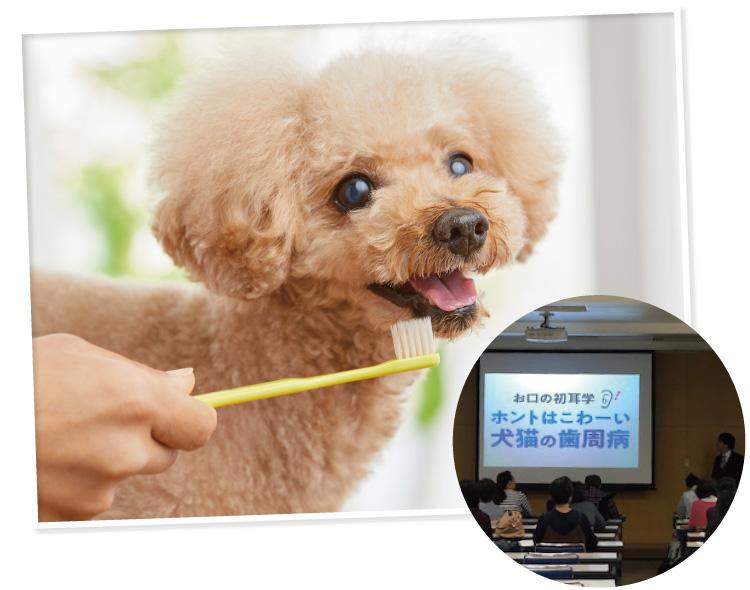 獣医師に聞くデンタルケア、ほんとはこわい犬猫の歯周病
