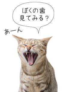 犬猫の歯周病ケア