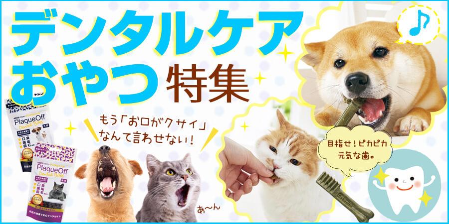 デンタルケア効果のある猫用おやつ