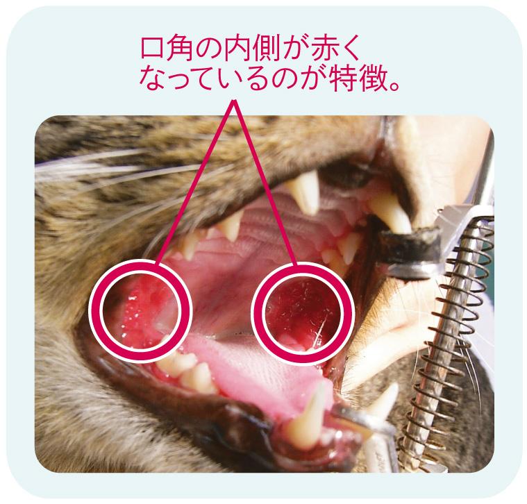 犬猫の歯肉炎の悪化招く更なるトラブル