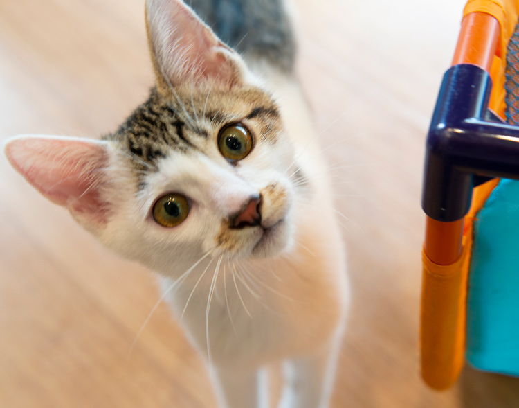 新型コロナウィルス感染症 感染拡大予防対策に伴うペットに関するアンケート調査