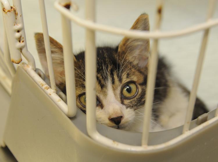動物愛護センターや動物愛護団体からペットを譲り受けることを検討してみてください