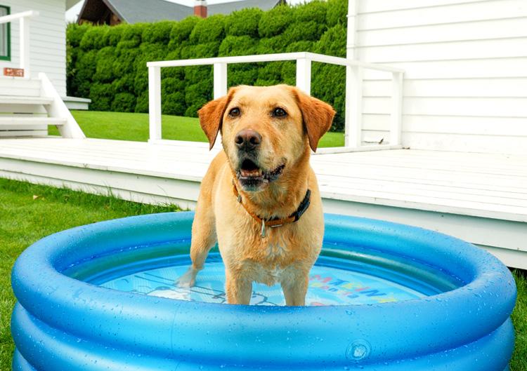 犬の熱中症は危険!応急処置と危険な状況別の対処法