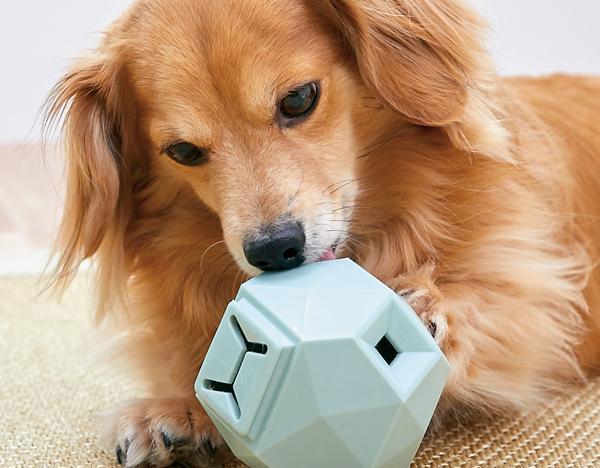犬用知育玩具を使って、お部屋で脳トレと簡単な運動に!犬用 知育おもちゃ特集