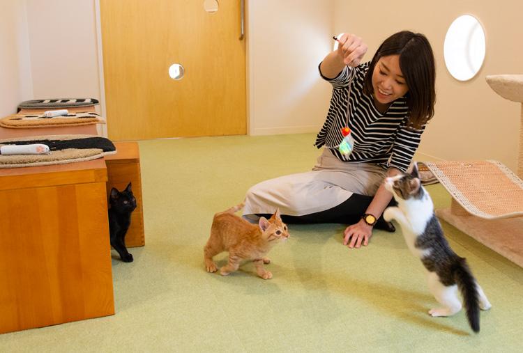 愛犬・愛猫の免疫力を上げるサプリメントも人気、愛犬のSTAY HOMEエリアをつくる
