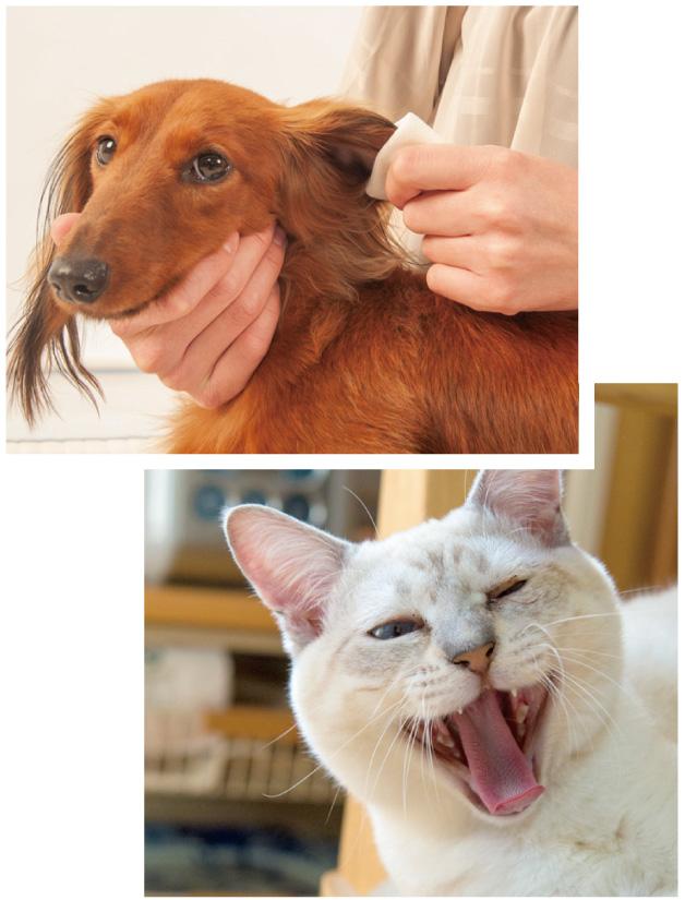 ココロナ禍で、ペットが教えてくれる大切なこと
