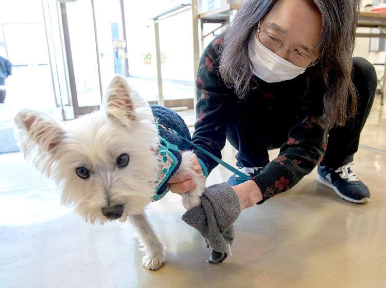 飼い主さんの一番の心配事は自分がコロナに感染した後のペット