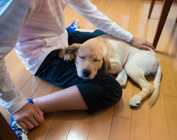 犬や猫にとって一番のご褒美は飼い主さんとの信頼関係